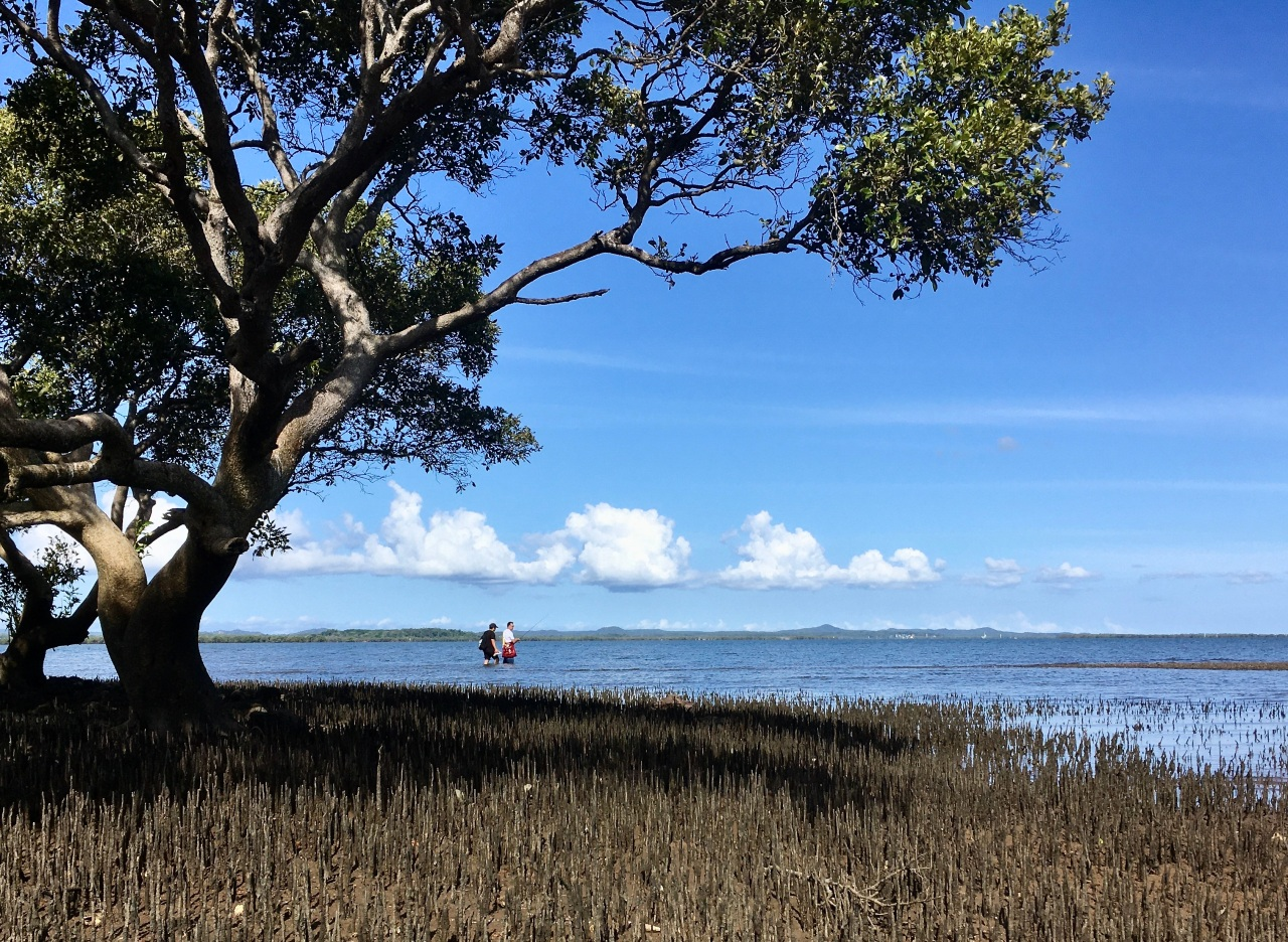 Mangroves, mudflats and minion management #2